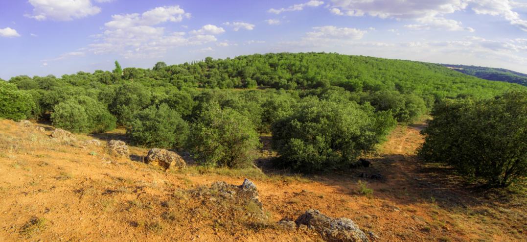 Panorámica del Bosque de Valdenazar