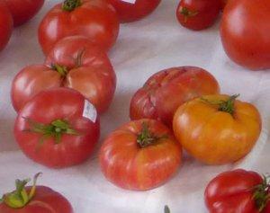 tomaterosaventosa