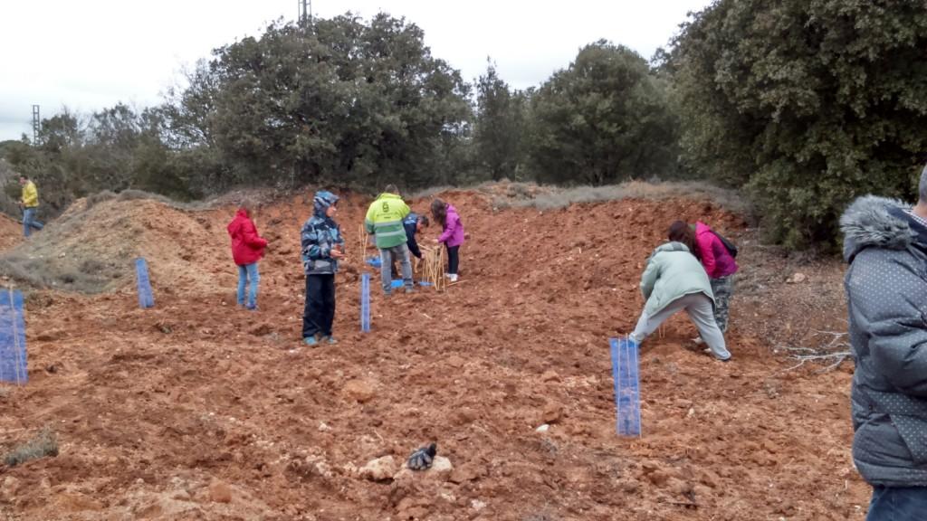 Plantación en el Bosque Valdenazar (Yebes-Valdeluz)