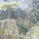 premio especial_A_maria murciano_3_poveda de la sierra_el pino de la piedra_05