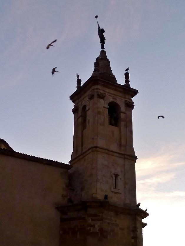 Cigüeñas sobrevolando Molina de Aragón