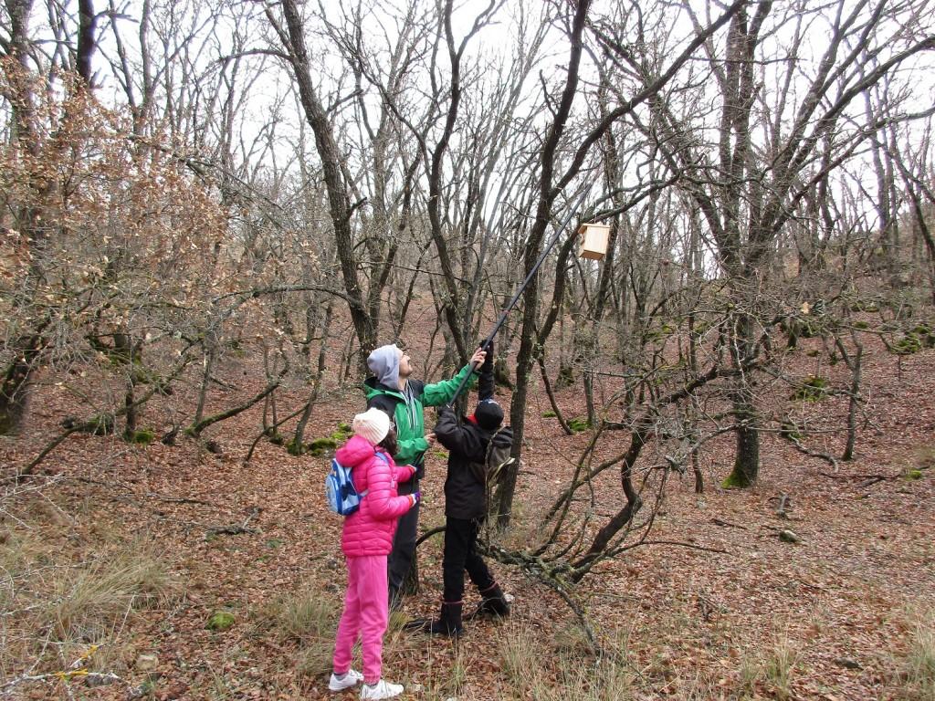 Ya en el bosque, se procedió a colgar las cajas nido