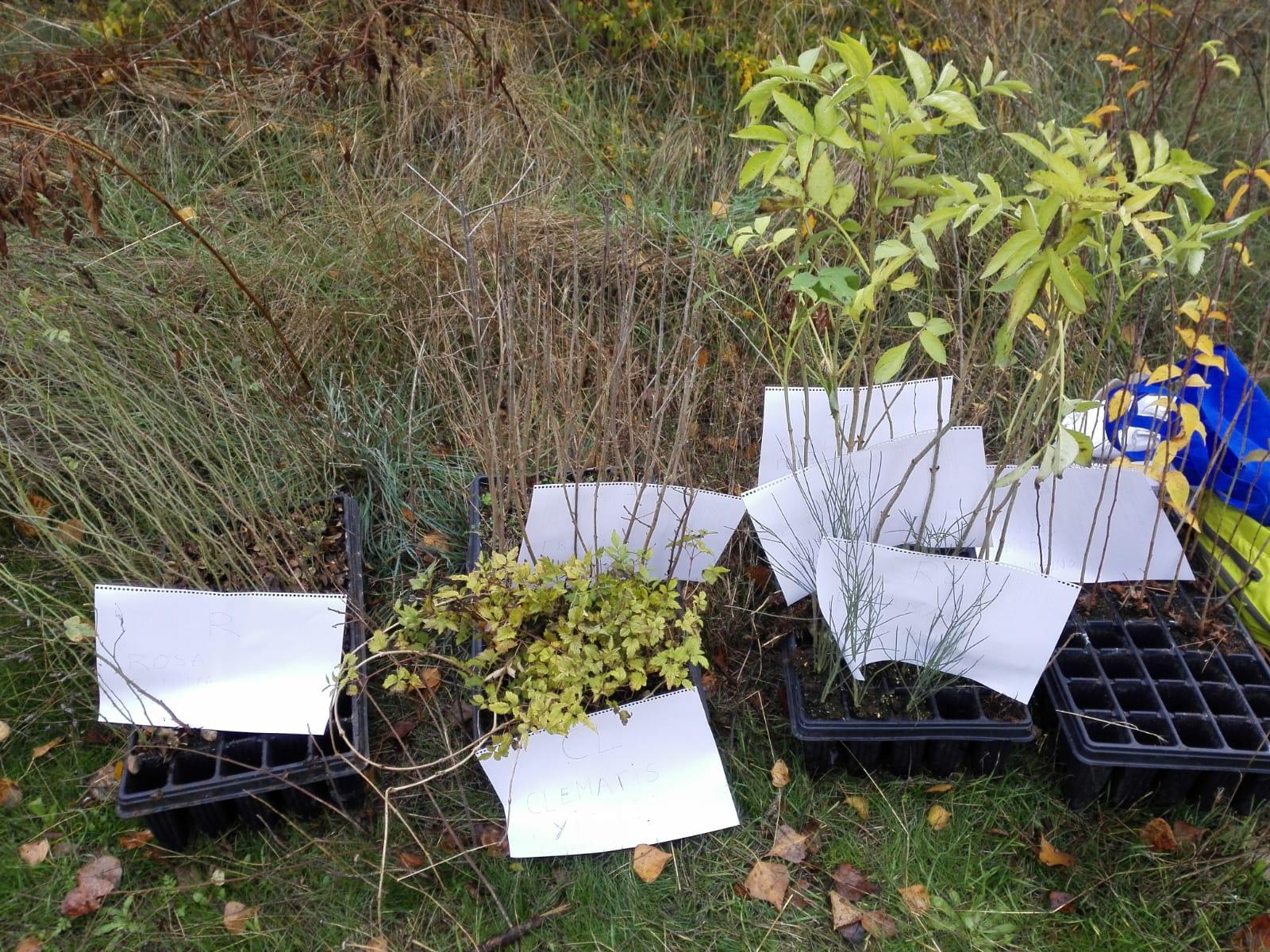 Planta en el río Henares